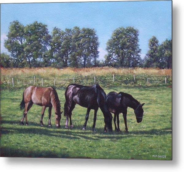 Three Horses In Field Metal Print