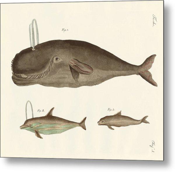 Three Kinds Of Whales Metal Print