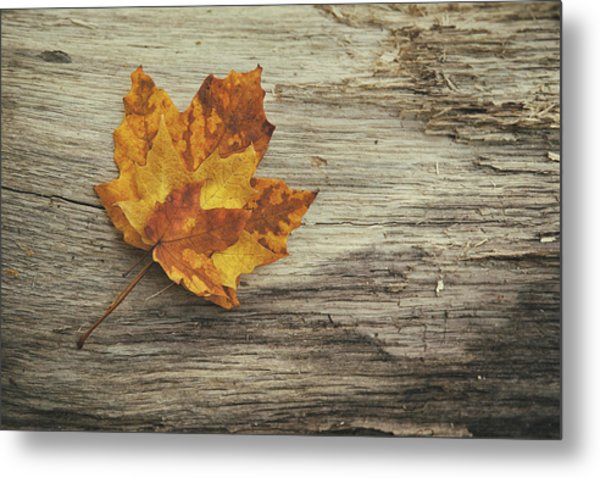 Three Leaves Metal Print