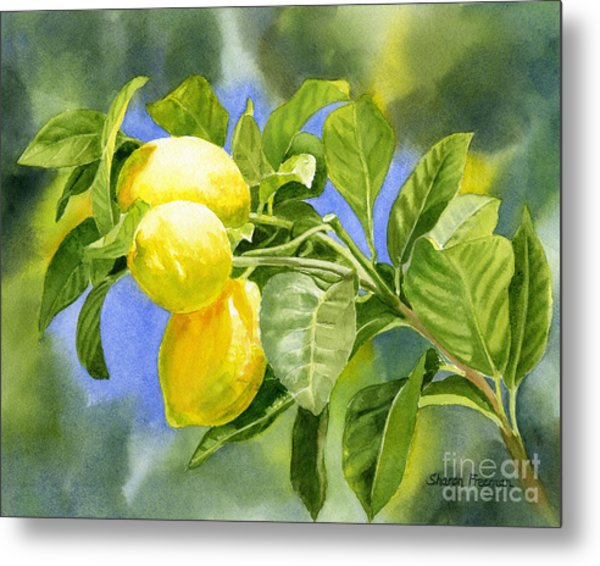 Three Lemons Metal Print