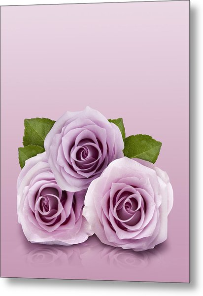Three Lilac Roses Metal Print