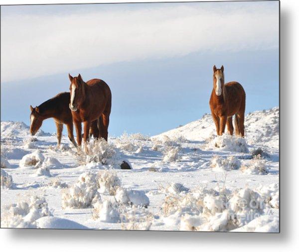 Three Mustangs In Snow Metal Print