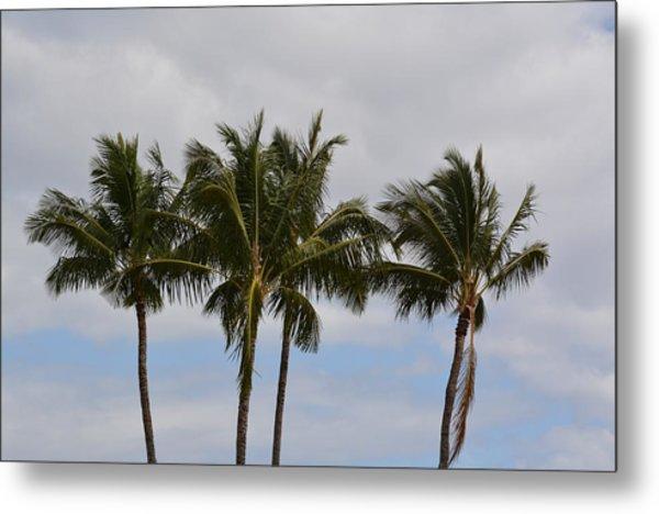Three Palm Trees Metal Print