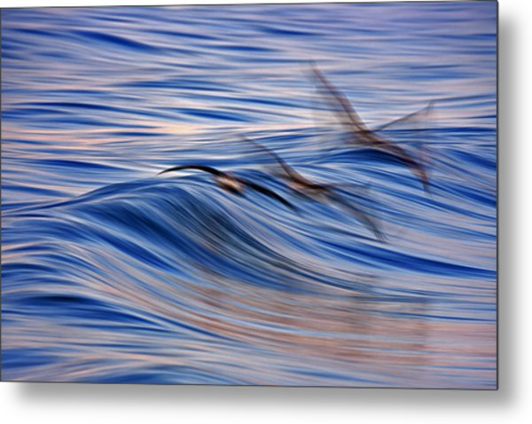 Three Pelican Blur  C6j6160 Metal Print