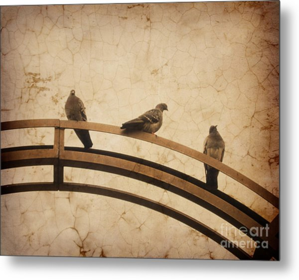 Three Pigeons Perched On A Metallic Arch. Metal Print