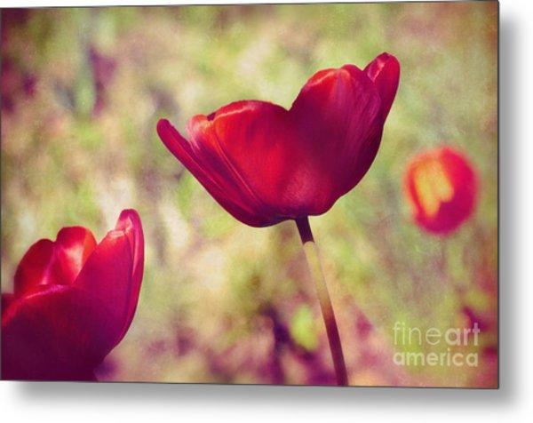 Three Tulips Metal Print