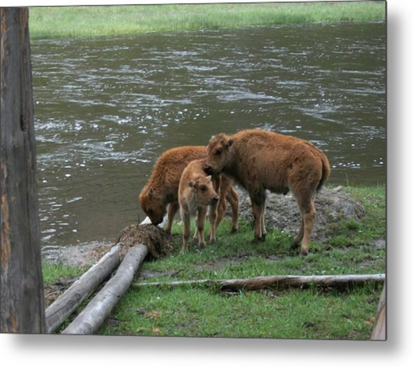 Threesome Metal Print by Yvette Pichette
