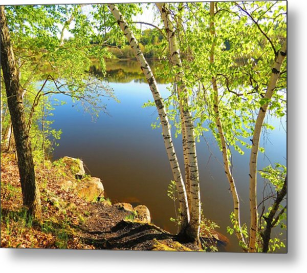 Through The Birch Metal Print