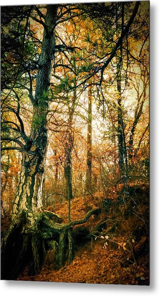 Through The Island Forest Metal Print