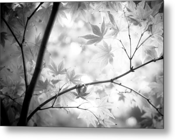 Through The Leaves Metal Print