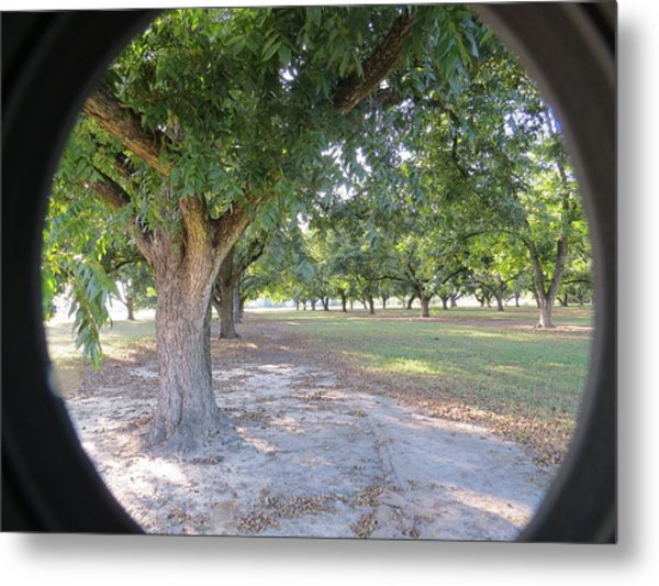 Through The Orchard Metal Print