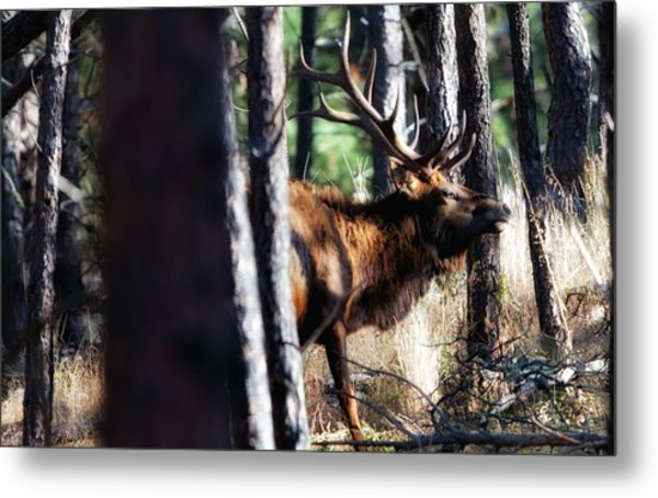 Thru The Trees Metal Print