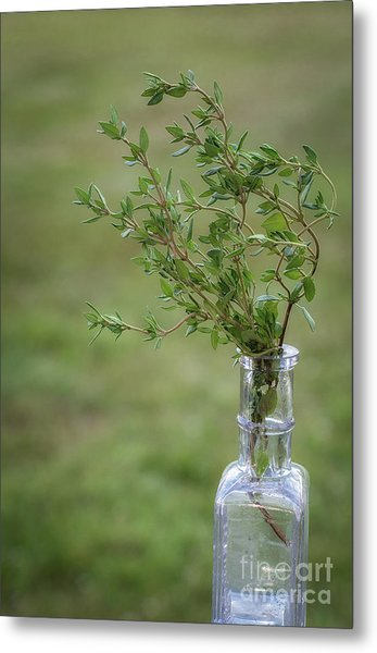 Thyme In A Bottle Metal Print