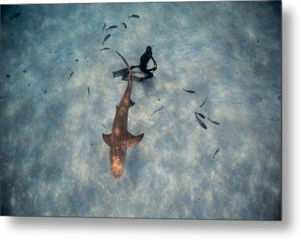 Tiburon Limon Metal Print by One ocean One breath