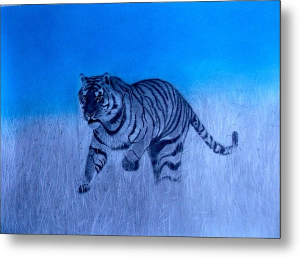Tiger And Blue Sky Metal Print