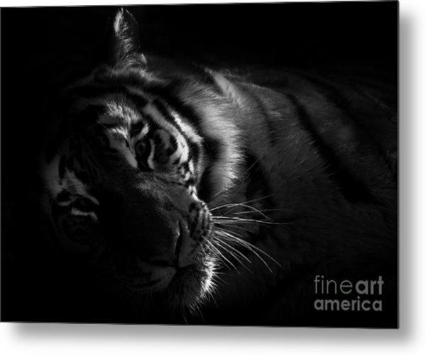Tiger Beauty Metal Print