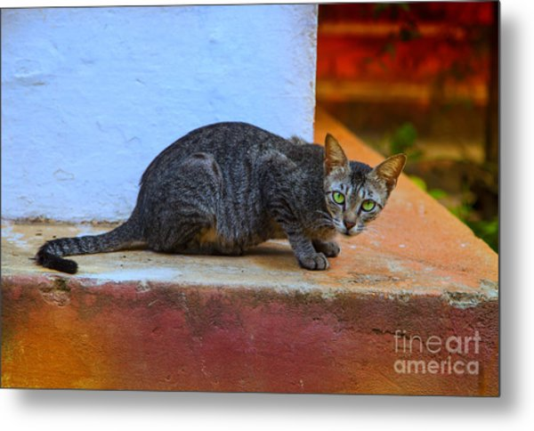 Tiger Cat With Luminous Eyes Metal Print by Gina Koch