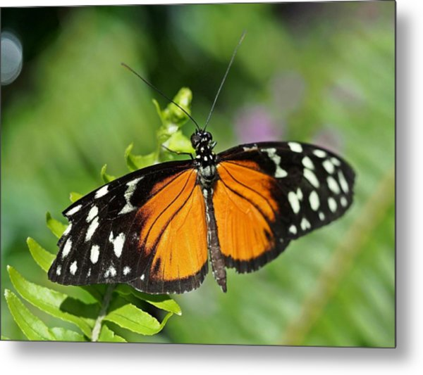 Tiger On The Leaf Metal Print by Atchayot Rattanawan