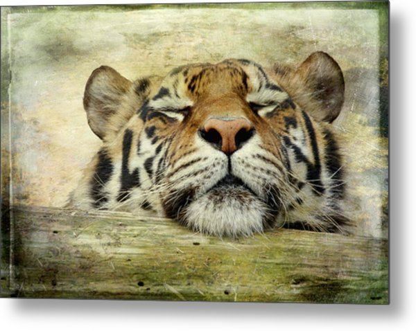 Tiger Snooze Metal Print