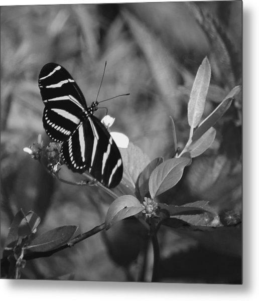 Tiger Stripe Butterfly Metal Print