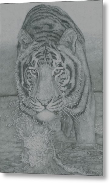 Tiger Through Water Metal Print by Rich Colvin