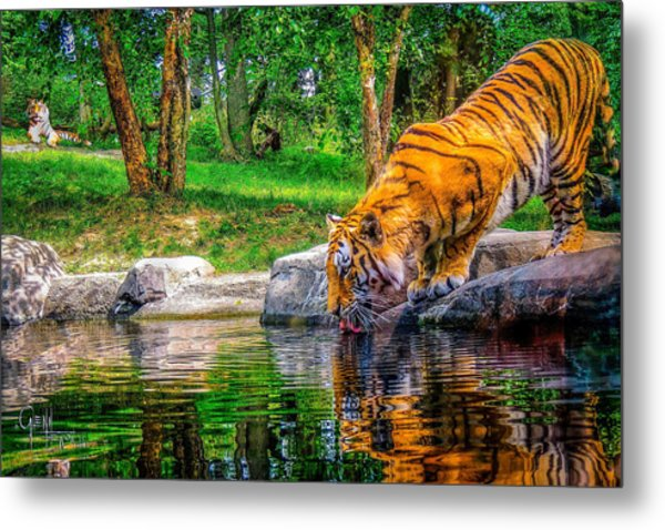 Tigers Pond Metal Print