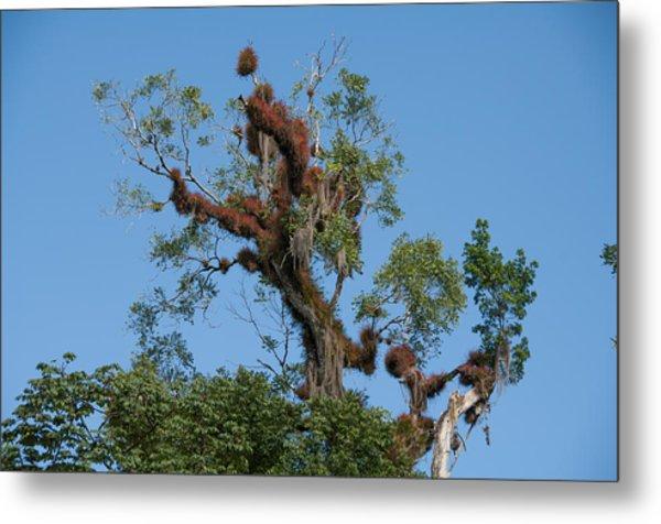 Tikal Furry Tree Metal Print