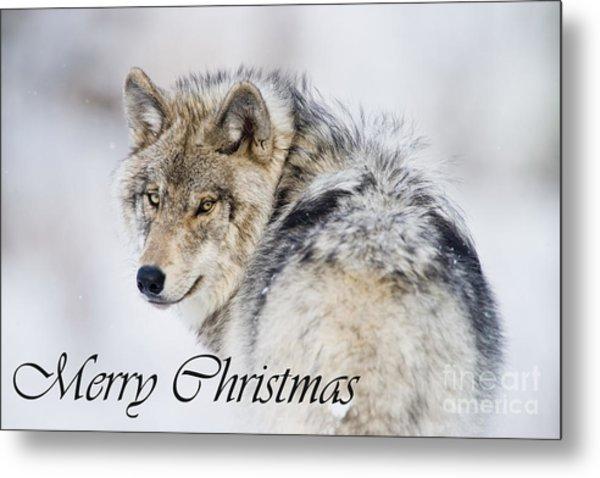 Timber Wolf Christmas Card 2 Metal Print