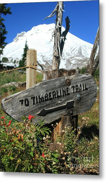 Timberline Trail Metal Print by Cari Gesch