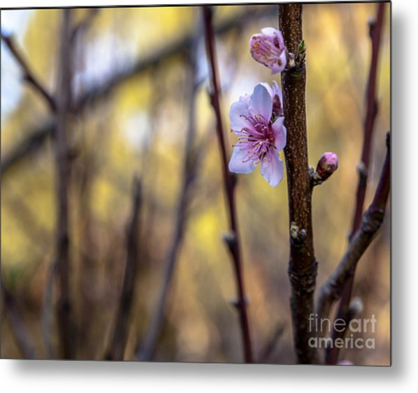 Time To Bloom Metal Print by Serene Maisey