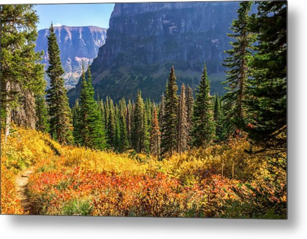 Timeless Colors Of Nature Metal Print by Rohit Nair