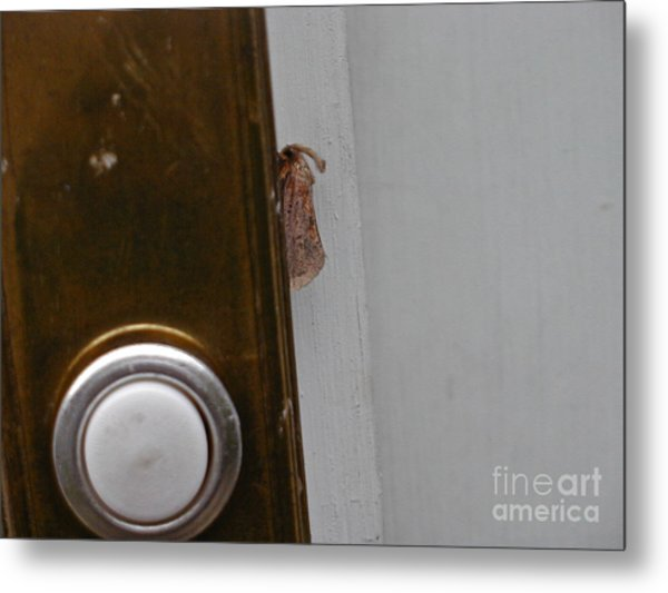 Tiny Doorbell Moth Metal Print