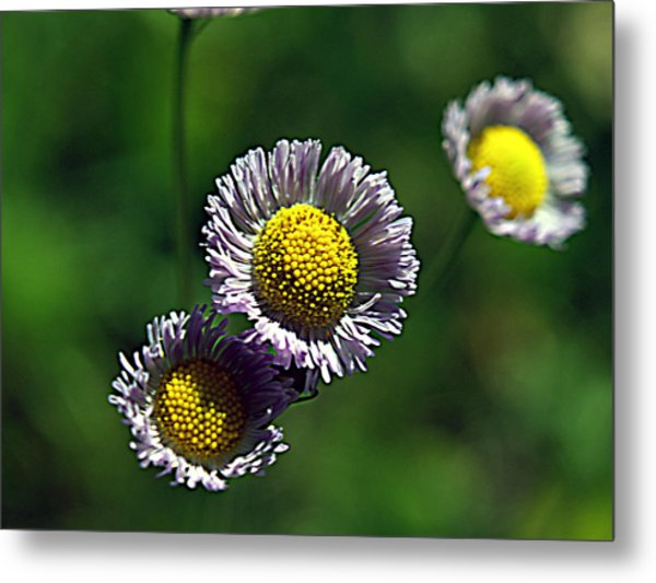 Tiny Little Weed Metal Print