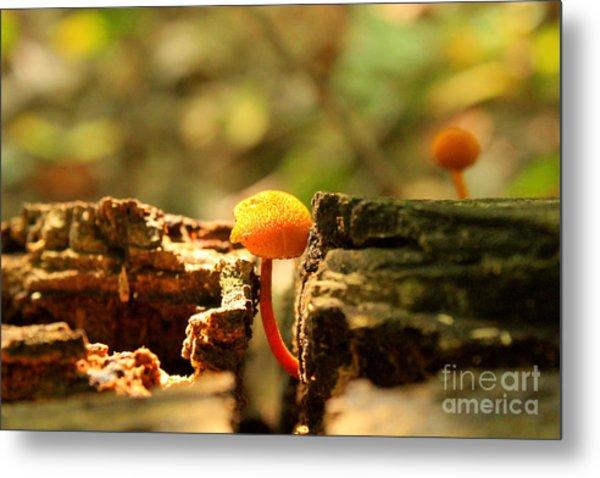Tiny Mushroom Metal Print