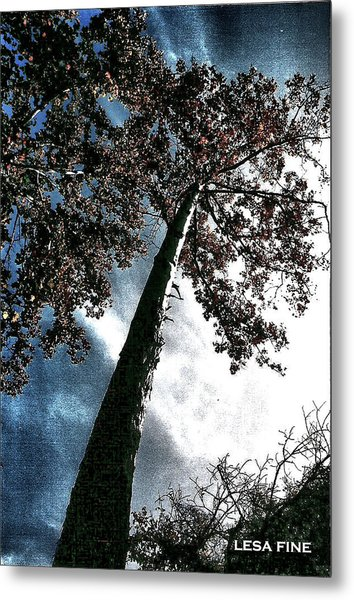 Tippy Top Tree II Art Metal Print
