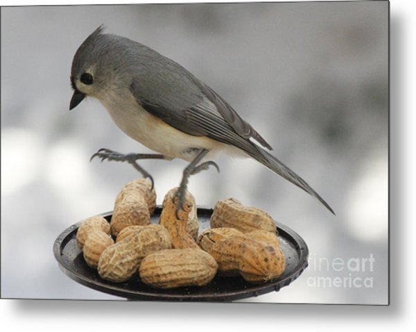 Titmouse Dance Metal Print
