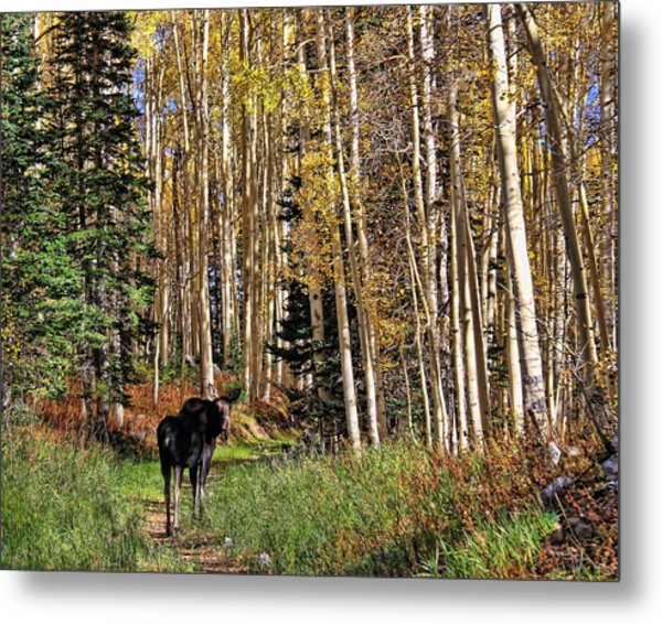 To Hike With A Moose Metal Print by Gene Praag