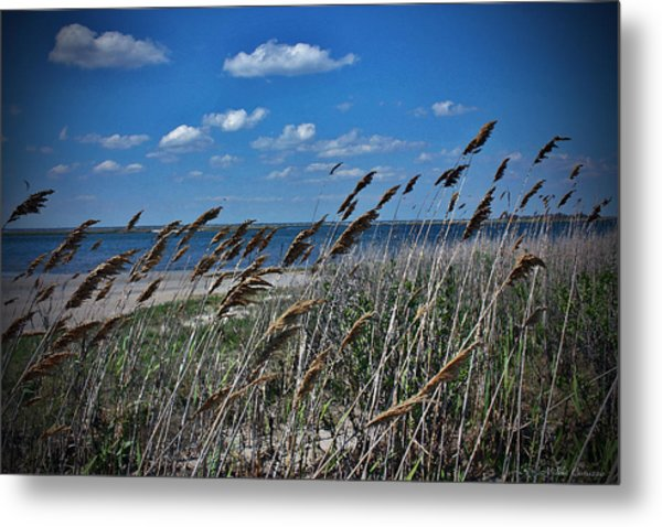 Tobay Beach Li Metal Print