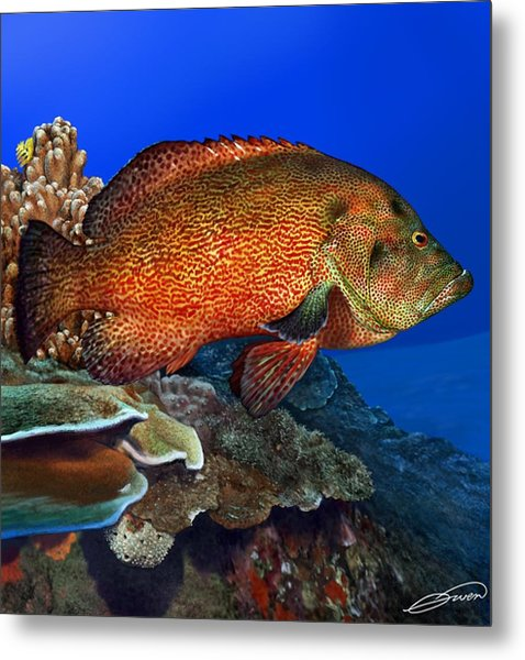 Tomato Grouper Metal Print by Owen Bell
