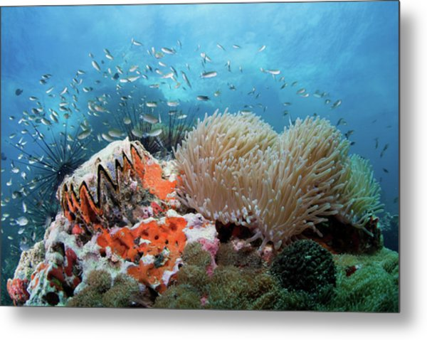 Toothy Reef Metal Print by Nature, Underwater And Art Photos. Www.narchuk.com