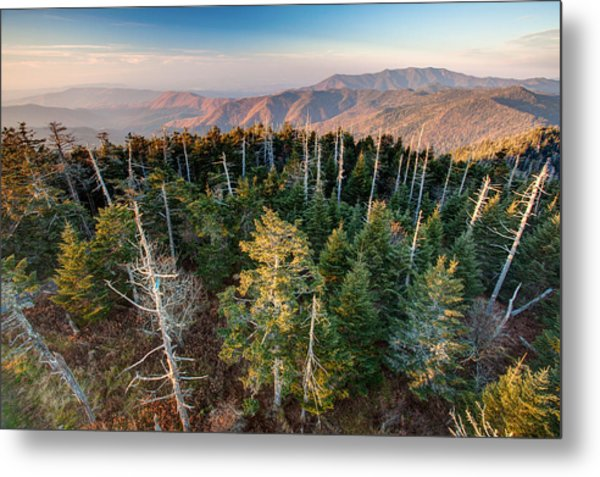 Top Of The Dome Metal Print by Scott Moore