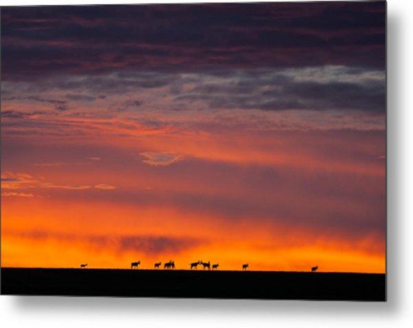 Topi Herd Sunrise Metal Print