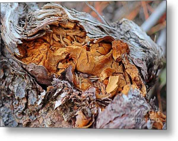 Torn Old Log Metal Print