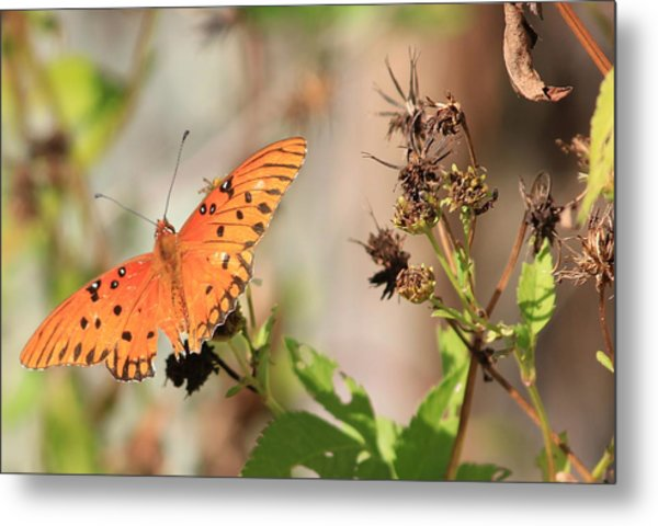 Torn Wing And Dry Flowers Metal Print