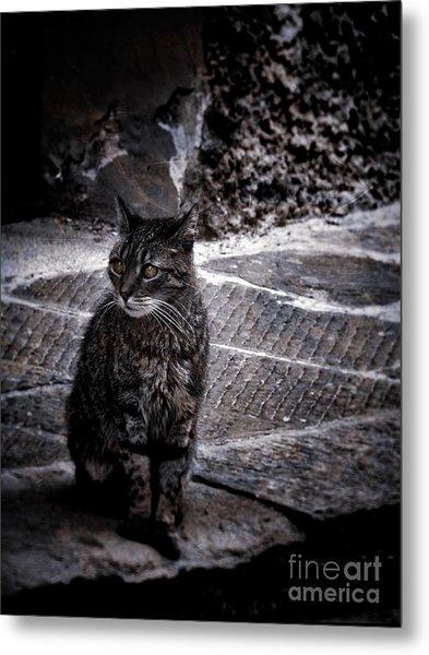 Tortishell Cat Metal Print