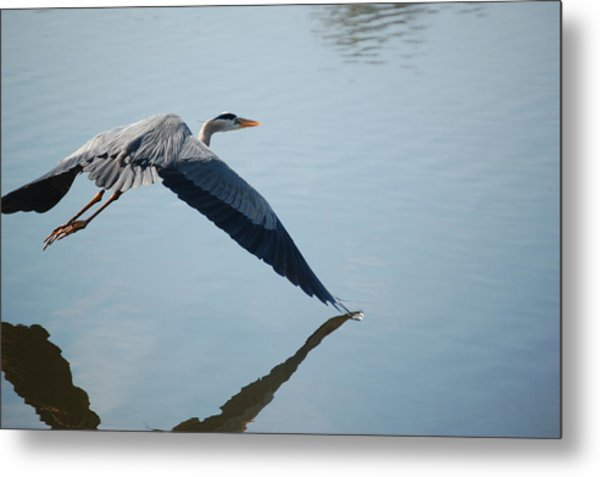 Touch The Water With A Wing Metal Print