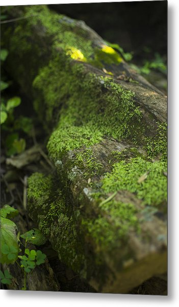 Touched By Nature Metal Print by Michael Williams