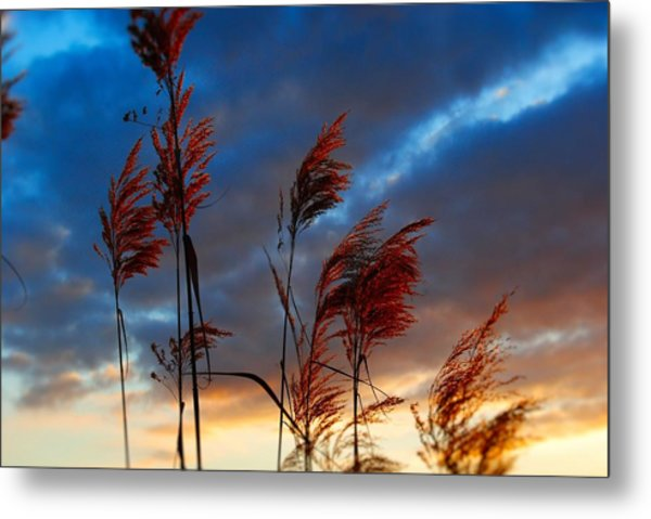 Touched By The Sunset Metal Print