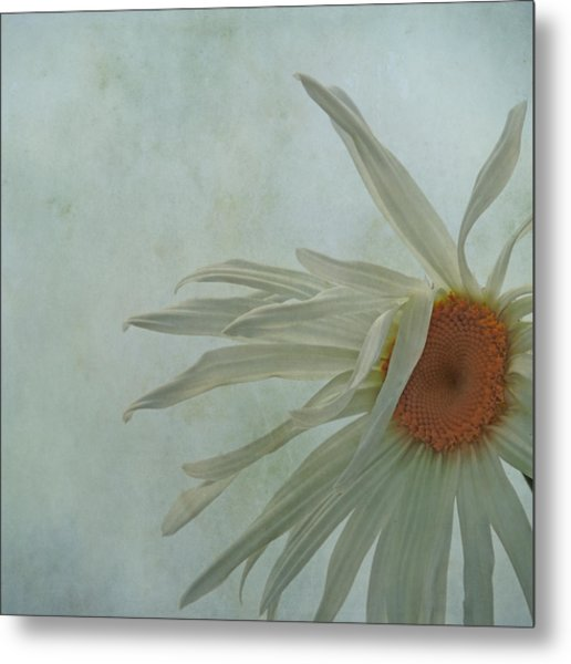 Metal Print featuring the photograph Tousled  by Sally Banfill