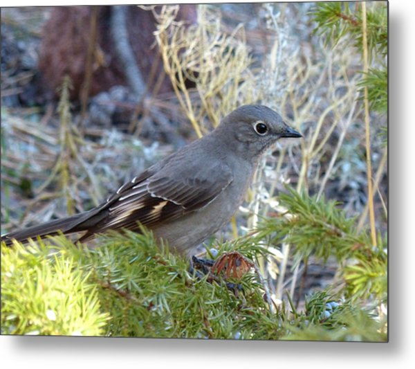 Townsends Solitaire Metal Print